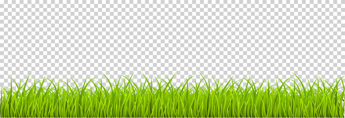 Green Grass realistic. Spring grass, field, nature eco - stock vector. Fototapete