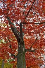 Colorful red and yellow foliage trees in garden during autumn at Wilhelm Külz Park in city of Leipzig, Germany