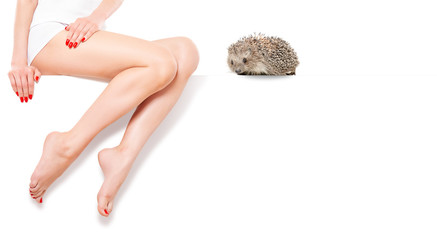 Cute hedgehog near beautiful  slim female legs sitting at banner. Unwanted hair removal concept. Wall mural