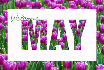 welcome May background