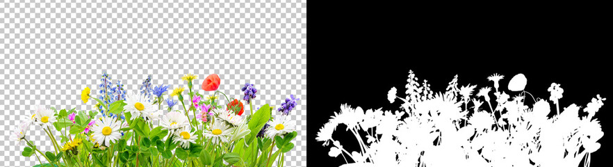Tuinposter Bloemen spring grass and daisy wildflowers isolated background
