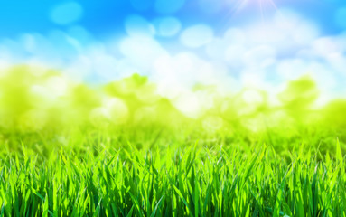 Wall Mural - sunny green grass spring background