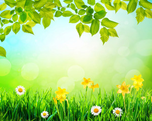 flowers and grass background with tree branch