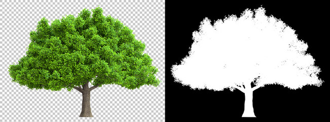 a tree isolated with high detailed leaves with clipping path and alpha channel