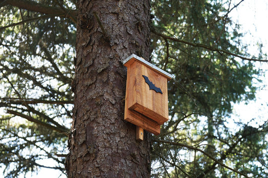 bat box in tree - wildlife conservation in nature reserve forest