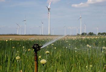 Watering is seen on a onion field near Andau