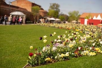 Arangierte Blumenwiese für Bienen Fotoväggar