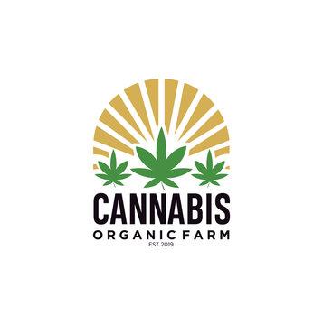 Three Cannabis with Sun Logo Design Template. Pot Leaf, Hemp in circle shape logo design inspiration vintage Retro Hipster