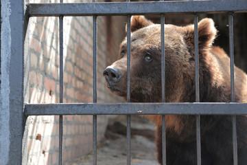 Portrait of European Bear in Zoo