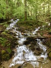 Waldfluss im Nationalpark Berchtesgaden (Bayern)