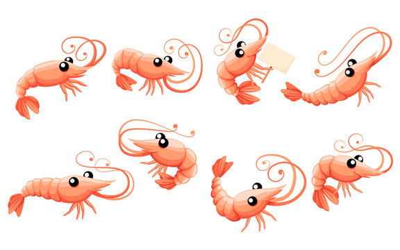Cute shrimp set. Cartoon animal character design. Swimming crustaceans icon collection. Flat vector illustration isolated on white background
