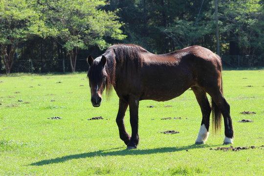 Body Shot of Senior Horse