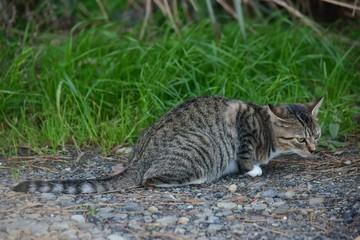 Stray cats~さくらねこにしてあげたい野良達。
