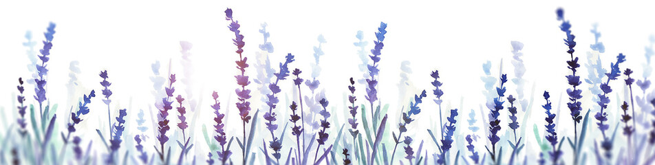 lavender watercolor banner. hand drawn illustration. flower field.