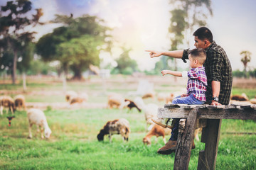 Father and son sit and relax looking at sheep grazing on farm with sunset background