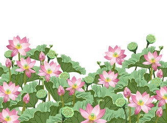 Lotus flowers with leaves and seed pods. Hand drawn vector illustration of lotus plants (Nelumbo nucifera) with space for text on white background.