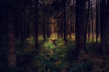 Zauberhafte dunkle Wälder im Nationalpark Harz