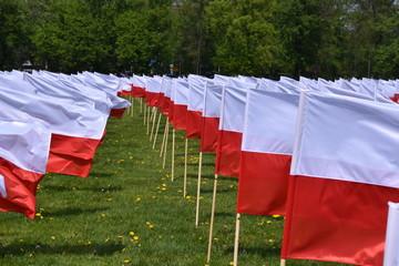 Fototapeta Flaga Polski święto flagi Błonia Krakowskie
