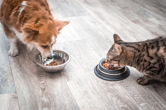 dog and a cat are eating together from a bowl of food. Pet food concept
