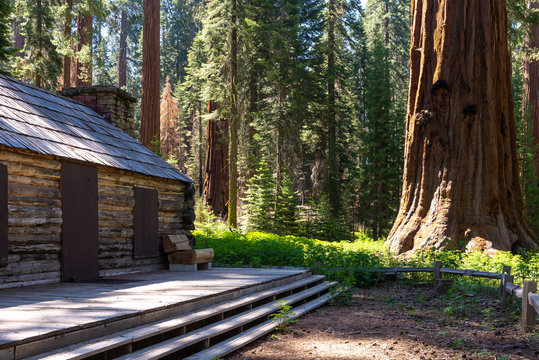 Mariposa Grove, Yosemite National Park, California, USA