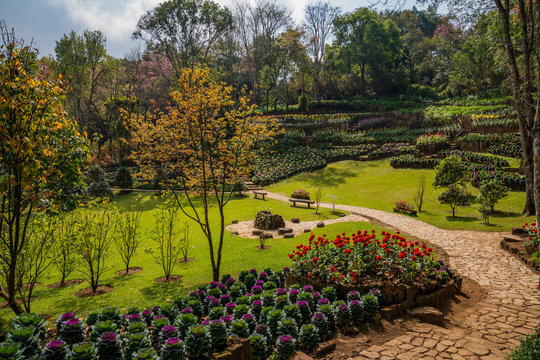 Green lawn with stone curvy pathway, trees, cabbage and flower beds hilly landscape