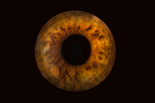 Human brown grey eye iris. Pupil in macro on black background