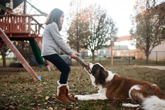 10-12 year old girl playing tug o war with large saint bernard dog