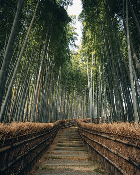 Kyoto Japan Arashiyama Bamboo forest