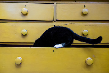Close up of black cat with white paw in drawer of a yellow chest of drawers.
