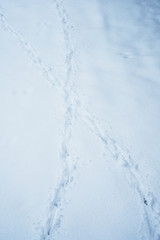 High angle close up of animal tracks in the snow.,Aston Rowant