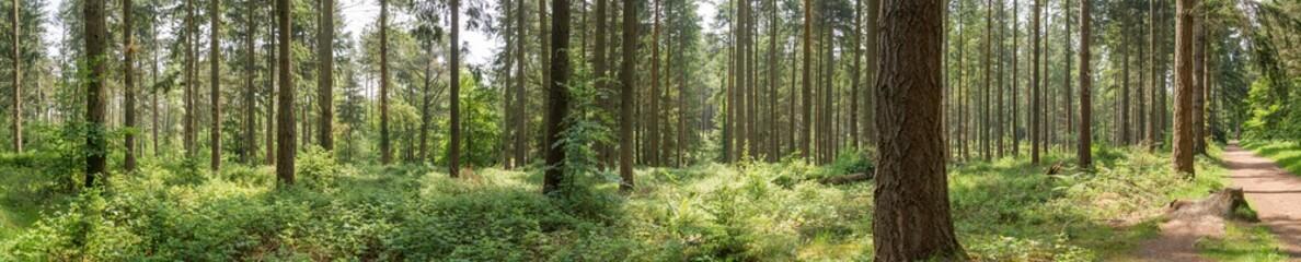 Fototapeta Forest landscape Hampshire England