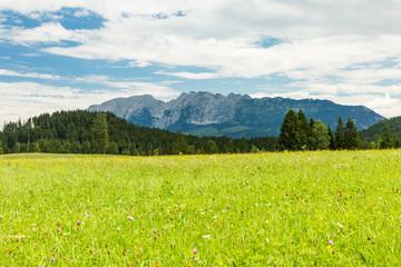 Austria, Styria, meadow with view on Schaertenspitze