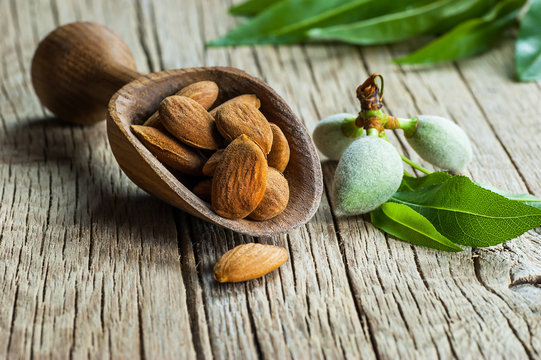 Almond nuts in wooden shovel on wooden table with green fresh raw almonds on almond tree branch