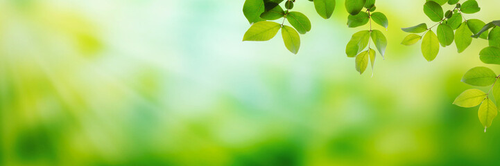 Summer green leaves on a shiny background Wall mural