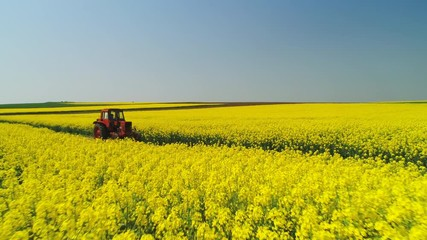Wall Mural - Aerial view of farm tractor in a rapeseed field, beautiful spring day