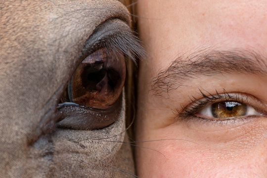 closeup of eye of woman and horse