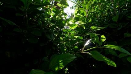 Wall Mural - Sun beams shining through foliage of a green fresh bush during a bright sunny day. Steadicam shot. UHD