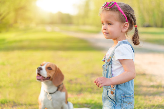 Little Caucasian girl walks with her dog in the summer in the park on the nature. Breed beagle