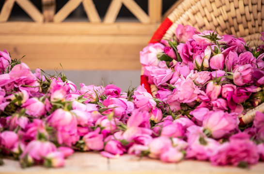 damask roses falling out of a basket