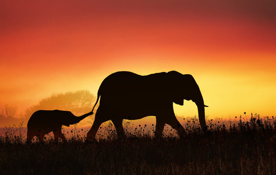 Elephant mom with her baby in tow