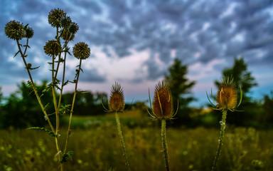 Wolken, Himmel und Pflanzen