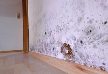 Mold, wall, cellar, brown cellar sponge, fungus, damage,