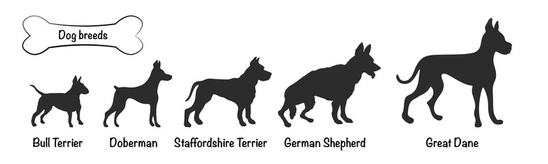 Vector silhouettes of 5 dog breeds on white background. Isolated icons of terriers, shepherd, doberman, great dane