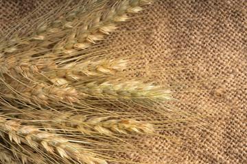 ear of wheat on jute fabric