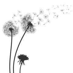 Fototapeta Abstract black dandelion, flying seeds of dandelion - for stock obraz