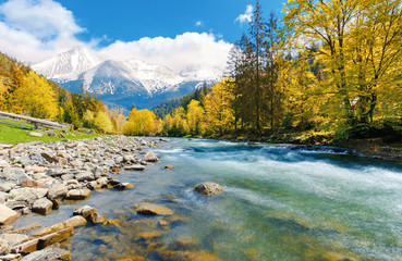 gorgeous day near the forest river in mountains. deciduous tree with vivid yellow foliage among spruce on the curve rocky shore. dreamy composite autumn landscape with distant snowy peaks