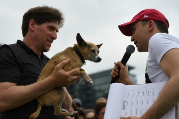 A Chihuahua dog and owner are interviewed after it wins it's heat race during the 'Running of the Chihuahuas' dog race as part of Cinco de Mayo celebrations in Washington