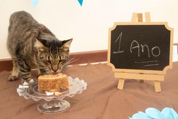 Gato e seu aniversario