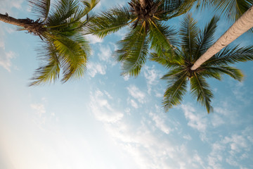 Wall Mural - Vintage nature background - coconut palm tree on tropical beach blue sky with sunlight of morning in summer, uprisen angle. vintage instagram filter