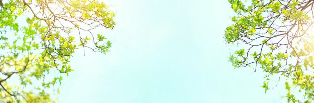 Beautiful Spring forest. Young green leaves of trees against blue sky and sunlight. green Foliage on sunny day. nature spring season Background. banner, copy space. soft selective focus.